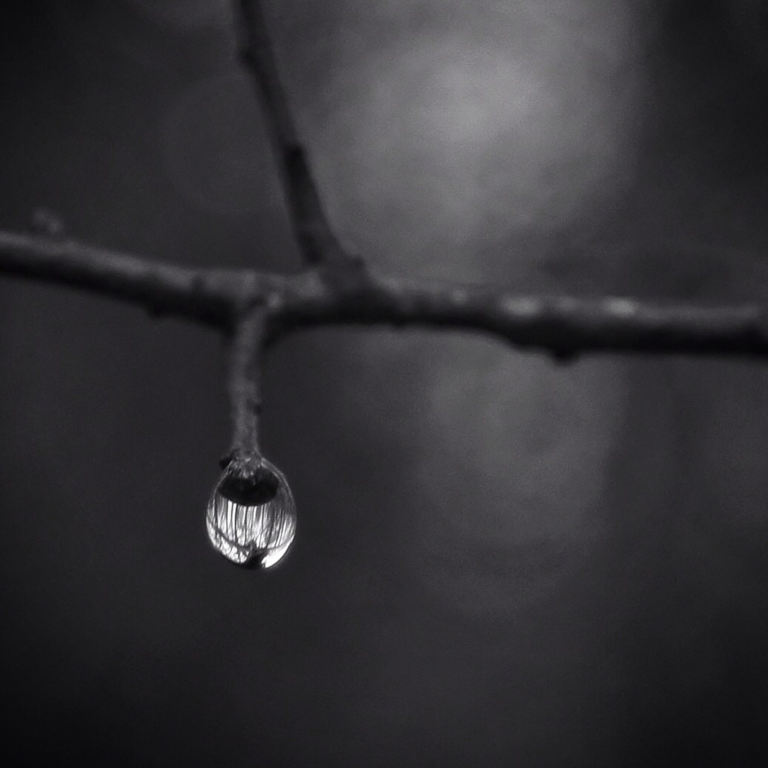 close-up, drop, focus on foreground, water, wet, hanging, selective focus, fragility, dew, twig, raindrop, nature, no people, purity, detail, rain, branch, indoors, weather, day