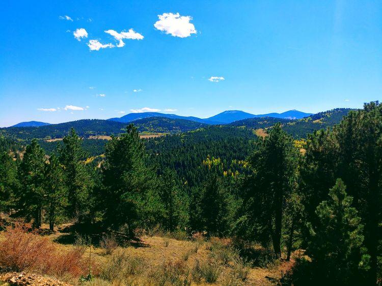 Nature Outdoors Colorado Tree Mountain Forest Pine Tree Blue Sky Mountain Range Landscape Tree Area