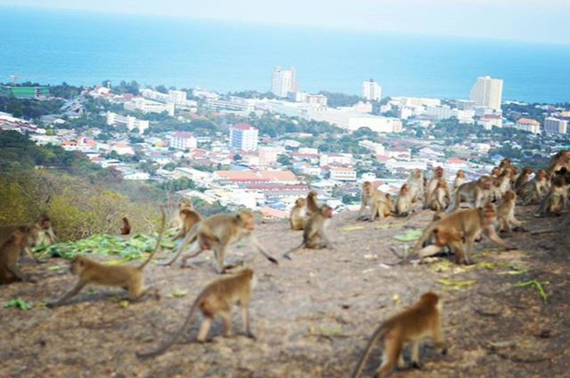 Monkeytown Monkey Monkeys City Animals Travel Trip Huahin Monkeymountain Thailand