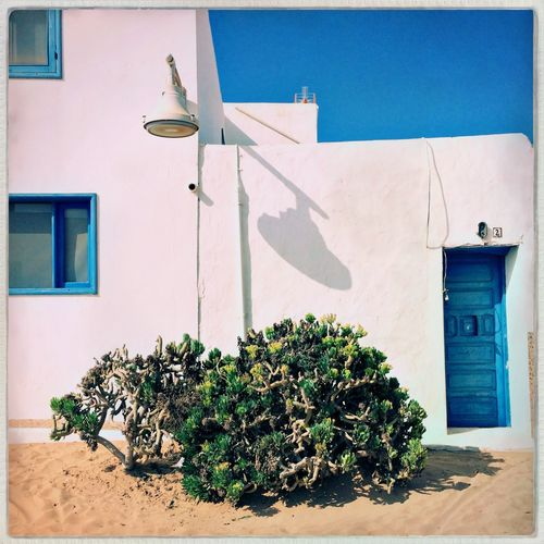 Canarian Islands Graciosa Island Lagraciosa EyeEm Selects Building Exterior Built Structure Architecture Plant Nature Sunlight Outdoors No People House