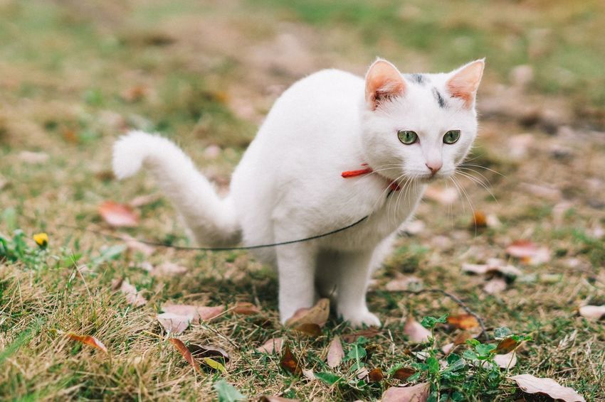 Domestic Cat Pets Animal Themes One Animal Domestic Animals Mammal Feline Looking At Camera Sitting