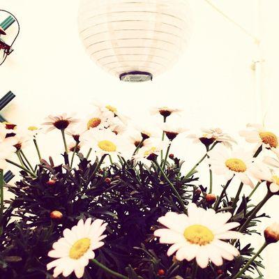 Garden Gardenparty Flowers ❤️🌸