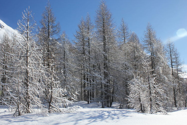 Winter season in Madesimo Madesimo Snow ❄ Sunny Winter Bare Trees Beauty In Nature Blue Sky Cold Temperature Day Italy Landscape Leafless Mountain Nature No People Outdoors Scenics Ski Runs Sky Snow Tranquil Scene Tranquility Winter