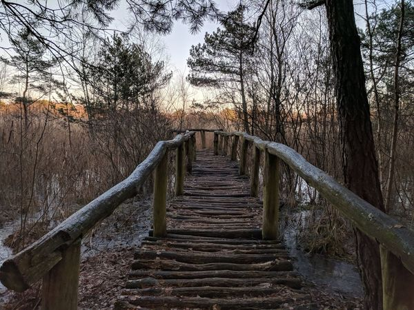 Afternoon walk around peat bog formation in Rąbień // Tree Bare Tree The Way Forward Forest Nature Branch Outdoors No People Day Footbridge Sky Peat Bog Wooden Pier Tranquility Tree Trunk Growth Scenics Beauty In Nature Google Pixel F/2.0 ISO 50 via Fotofall
