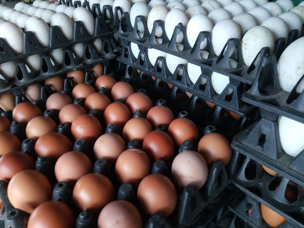 Abundance Large Group Of Objects Food Full Frame Egg Carton Indoors  Day Textured  Chicken Eggs Market Backgrounds Healthy Eating