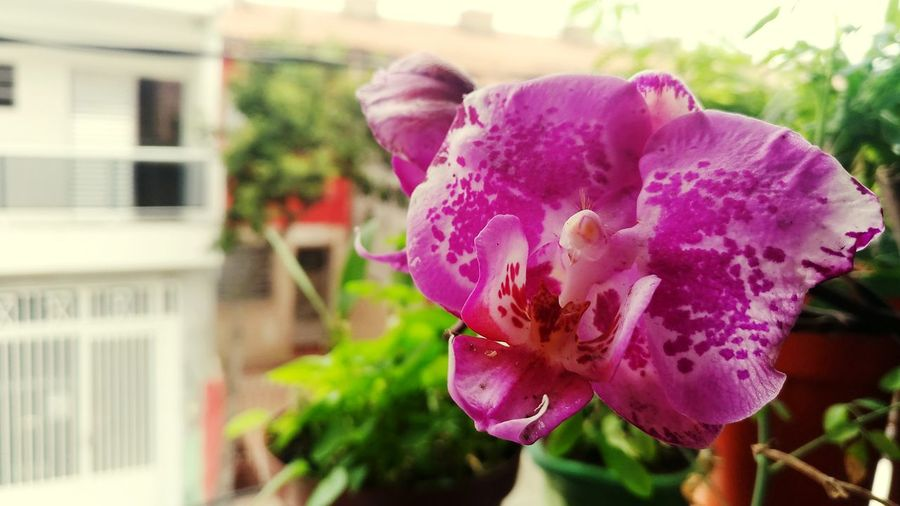 Nature Beauty In Nature Flower Plant