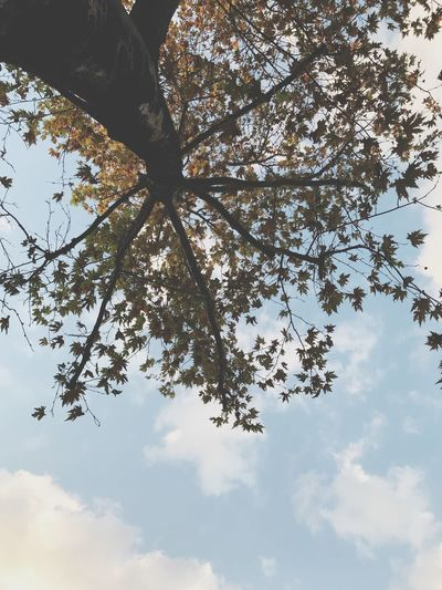 Tree Tree Plant Sky Cloud - Sky Low Angle View Branch Beauty In Nature Scenics - Nature Silhouette No People Day Tranquil Scene Leaf Plant Part Idyllic Nature Sunlight Tranquility Outdoors Growth