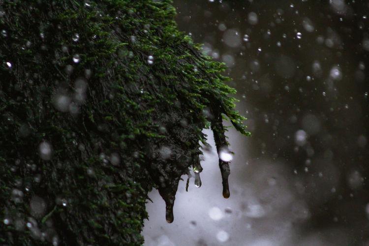 Raindrops on tree during rainy season
