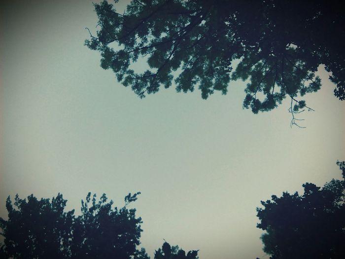 Sky Trees Nature