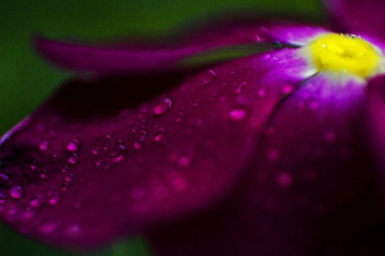 Close-up Flower Nature No People Dew Macro Photography Droplets, Water Droplets, Flowers  Droplets Flower Head Zoom Cold Mornings Life Nature Photography Diffrent View Viewpoint