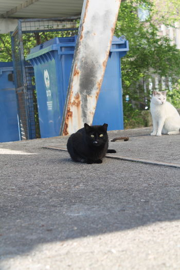 Owl, Feral Cat Animal Photography Animal Themes Black Color Cat Lovers Cats Cats 🐱 Cat♡ Feline Feline Portraits Felinelover Feral Cat Feral Cats Focus On Foreground Madrid Madrid Spain Nature No Filter, No Edit, Just Photography No People Outdoors Pets Portrait Pet Portraits