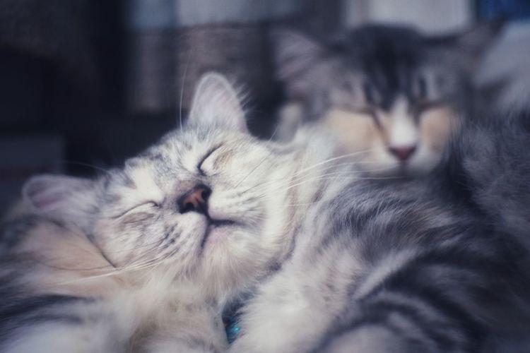 Close-up of cats sleeping
