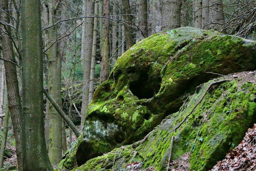 Stone skull Skull Schädel Skulls Stone Stein Fels Felsen Rock Nature Natur Landscape Landschaft Moss Moos Findling Sächsische Schweiz Saxony Deutschland Germany Natural Nationalpark Forest Wald Shades Of Winter