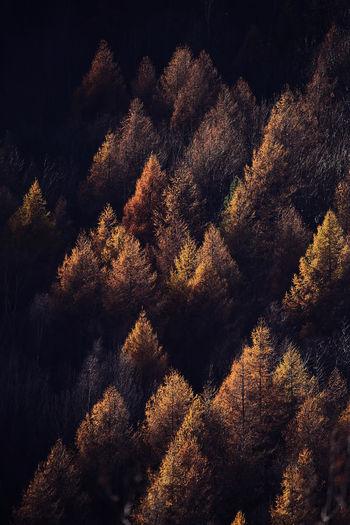Seasonal autumnal scenery in highlands. alpine landscape