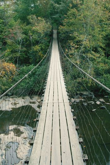 Swinging Bridge over Stream of water Connection Diminishing Perspective Direction The Way Forward Day Plant Tree Nature Bridge No People Footbridge Rope Bridge - Man Made Structure Built Structure Land Rope Bridge Outdoors Architecture