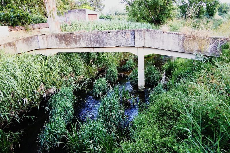 Pedestrian Bridge Plant Green Color Day No People Growth Nature Tree Outdoors High Angle View Grass Sunlight Built Structure Water Architecture Park Beauty In Nature Park - Man Made Space Tranquility Reflection