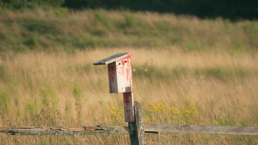 Birdfeeder Focus On Foreground Grass Landscape Nature Park