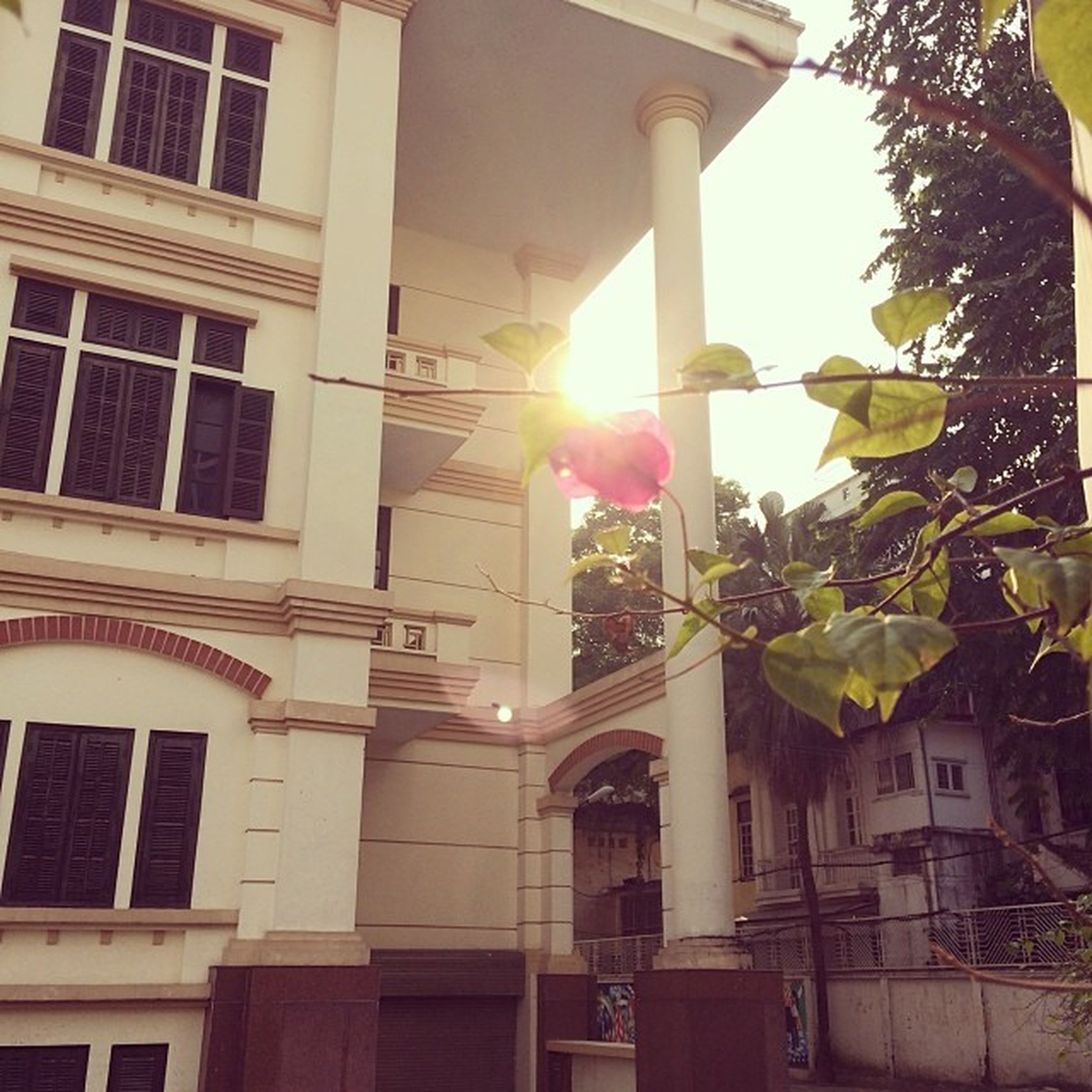 architecture, built structure, building exterior, low angle view, window, sunlight, building, residential building, residential structure, house, balcony, sun, day, no people, city, sunbeam, outdoors, tree, glass - material, sky