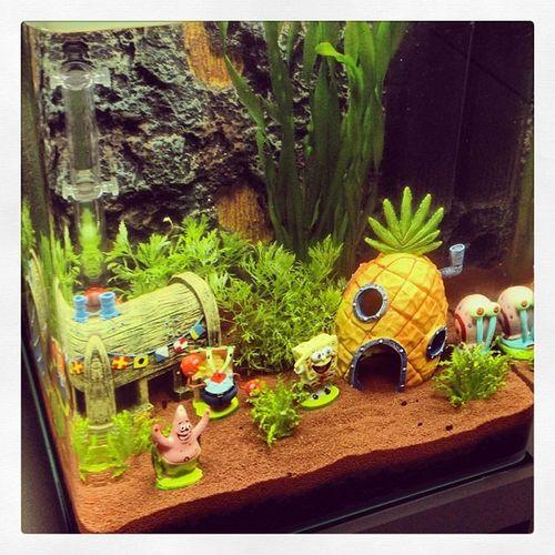 Sooo und nun haben wir es zusammen eingerichtet. :) Bikinibottom Spongebob KrosseKrabbe Nano aquarium