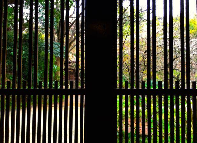 古民家はとにかくガラスの無い生活だったから、窓枠という概念が根本的に違う気がする。 Showcase April Japanese Style Japanese Culture Relaxing Moments Relaxing EyeEm Nature Lover Japanese Garden Sankei-en Sankeien Kanagawa Green Color Green Spring Is Coming  Spring Has Arrived Landscape Light And Shadow Silhouette Silhouettes Silhouette_collection