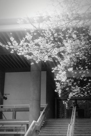 Building Nishishinjuku Tokyospring2016 Cherryblossoms Naturelover Bnw Bnw_society Bnw_collection Bnw_life EyeEm Gallery EyeEm Nature Lover EyeEM Tokyo EyeEm Japan