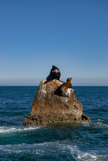 Sea lions basking in the sun at lands end in the resort of cabo san lucas