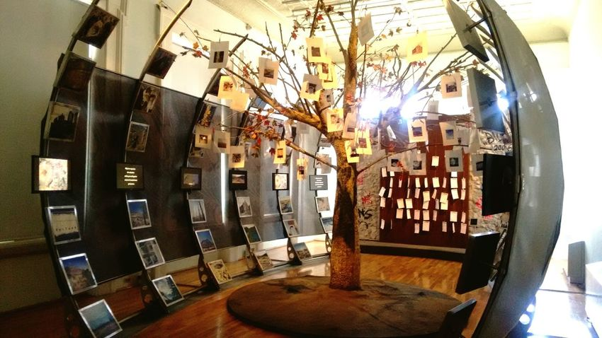 Tree Tree Art Tree Of Life Casa Chihuahua Museum
