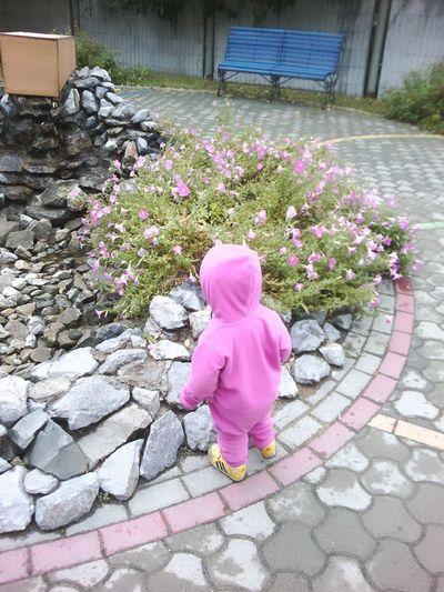 Fall. Loading......... Fall Siberian