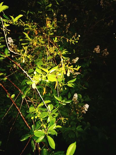 Green Color Plant Nature Tree No People Outdoors Night