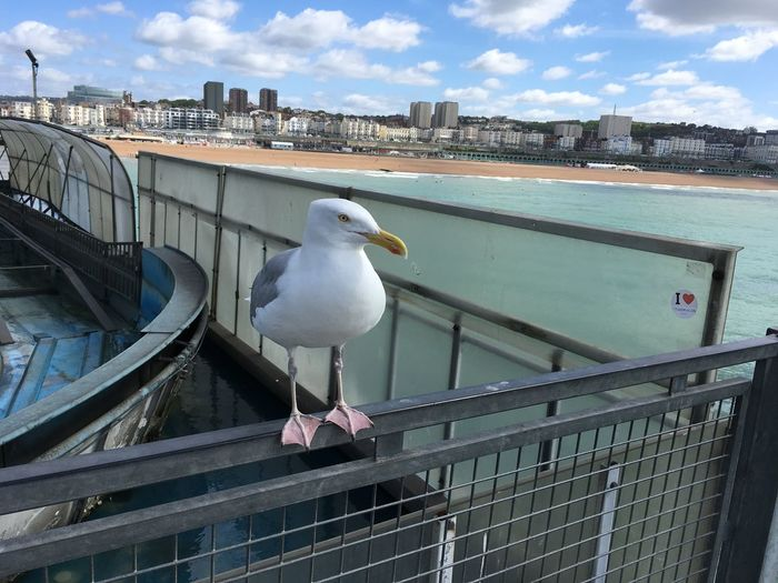 Animal Themes Animals In The Wild Anno Architecture Bird Bird With Attitude Brighton Beach Building Exterior Built Structure Day English Evil Eye Hanging Out Miffed Nature No People One Animal Outdoors Perching Railing Seagull Sky Water