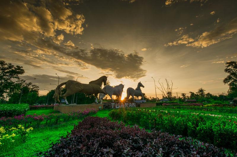 Green Hanging Out Nature Tuaran, Sabah Evening Kuda Sabah Sky Sunset