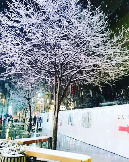 雪 買物公園 旭川