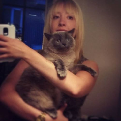 'the face of discomfort' Catsofinstagram Annoyed Petselfie