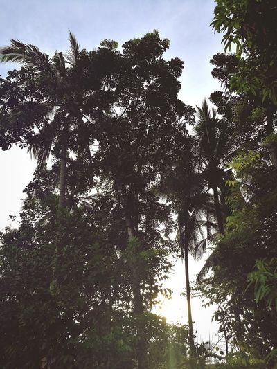 Trees Low Angle View Outdoors Nature Day No People Sunset Mobile Photography The Week On EyeEm EyeEmNewHere Green Color Beauty In Nature Growth Kalibo Aklan Philippines
