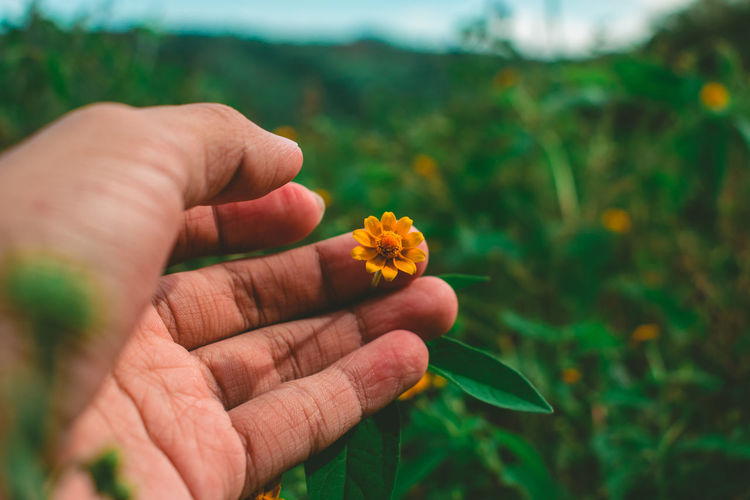 Cropped image of person touching flower