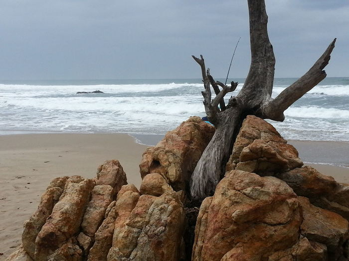 Tree_collection  Tree Thru Rock Sea And Sky Seasand Beach Photography Sea_collection Sea Rocks And Water Rocks Individuality Taking Photos Beauty In Nature Relaxing Check This Out Wonderful Eyeem Best Shots Eyeem Gallery South Africa Port Edward No People Nature Photography