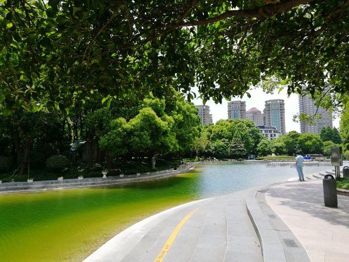 信达上海2016尽调路上 Shanghai❤ Lovely Weather Green Green Green!