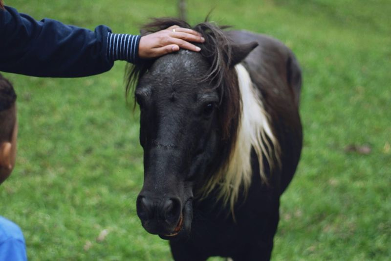 Close-up of horse on field