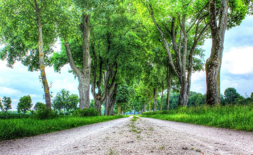 Allee Plant Tree Green Color Road Growth Grass Tranquil Scene