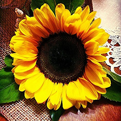 SUNFLOWER! Instafiore Finestudio Sunflower Girasole bello da morire favourite flower