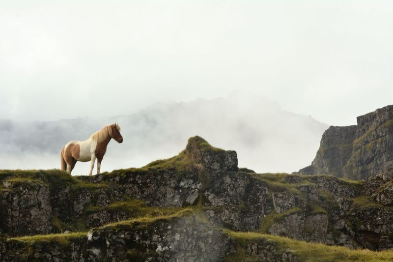 View of a horse on mountain against sky