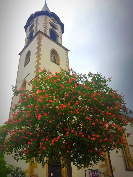 Church ⛪️ Enjoying Nature Nature Photography Nature_collection Blooming Church In Front Of Church Tree Flowering Tree Enjoying Life Summer Spring Flower LifeLoveLaugh
