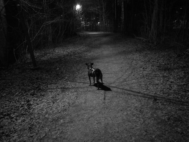 Monochrome Dog Dogs Of EyeEm Nightphotography Night Nightlights Underlights Cold Temperature Streetlamps