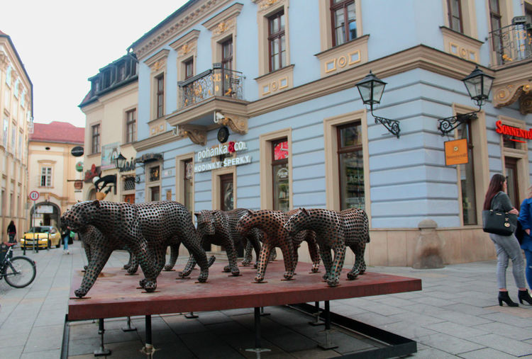Art In The Street Brno Czech Republic Historical Building Animal Animal Representation Architecture Art And Craft Building Building Exterior Built Structure City Creativity Day Incidental People Modern Art Nature Outdoors Representation Sculpture Statue Street The Past Travel Destinations The Street Photographer - 2018 EyeEm Awards The Photojournalist - 2018 EyeEm Awards
