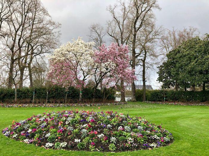 Plant Tree Park