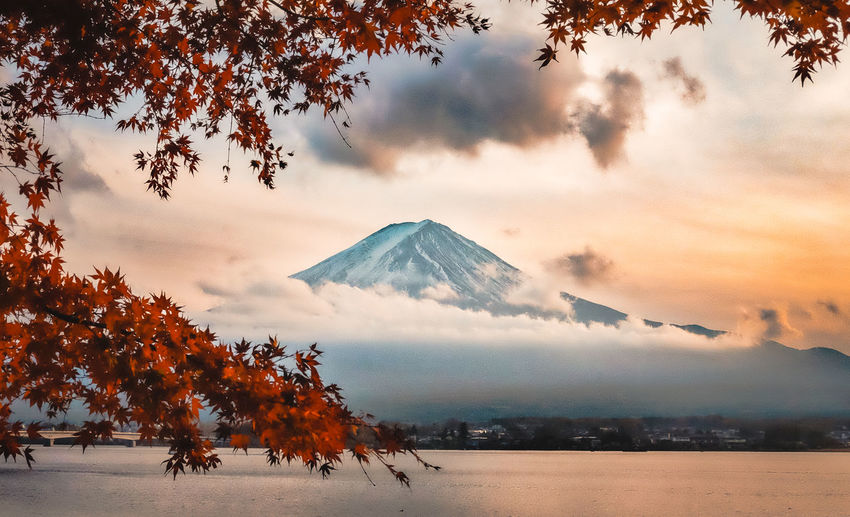 Fuji in autumn Sky Tree Cloud - Sky Beauty In Nature Mountain Scenics - Nature Sunset Plant Nature Tranquil Scene Orange Color Tranquility Environment Land Landscape Volcano No People Cold Temperature Winter Outdoors Snowcapped Mountain Mountain Peak Autumn Mt Fuji Fuji