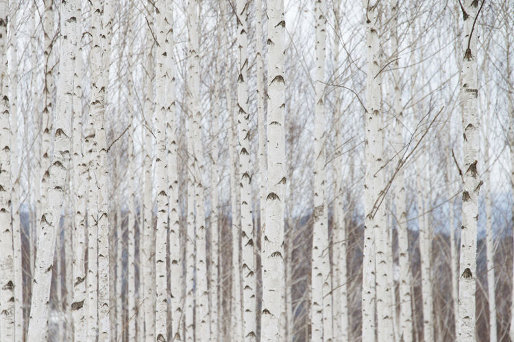 Full Frame Shot Trees In Forest During Winter