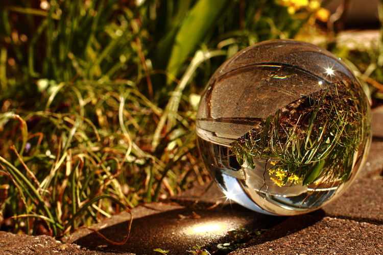 Close-up of crystal ball on footpath against plants