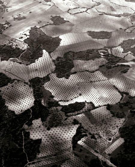 Polka dots land :) Landscape Dots Fields Polka Dots