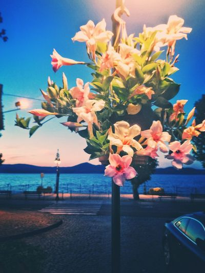 Water Flower Sea Day No People Beauty In Nature Nature Scenics Tree Sky Growth Outdoors Night Lake Sunrise White Flower Car